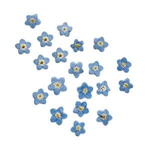 YUQINT Lot de 10 véritables fleurs séchées pressées pour loisirs créatifs, marque-pages, fabrication de cartes, décoration de mariage, fête (couleur : 04)