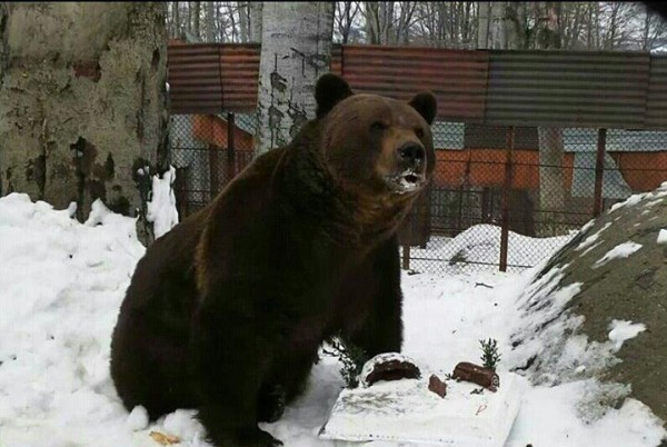 """Povestea """"fratelui urs"""" Baloo de la Straja, spusă de scriitorul Valeriu Butulescu"""