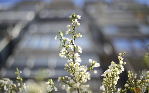 Cum va fi vremea de Paşte 2017. ANM a publicat prognoza meteo până în luna aprilie