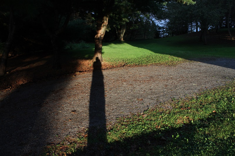 Avard Woolaver, shadow, self portrait, backyard,