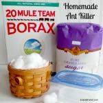 Homemade Ant Killer (That Really Works!)