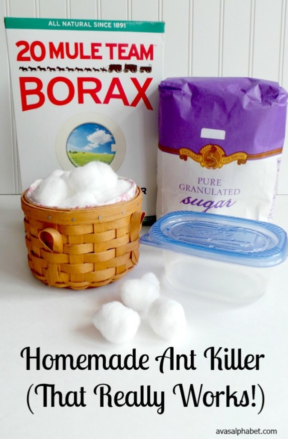 Homemade Ant Killer - Best of 2016