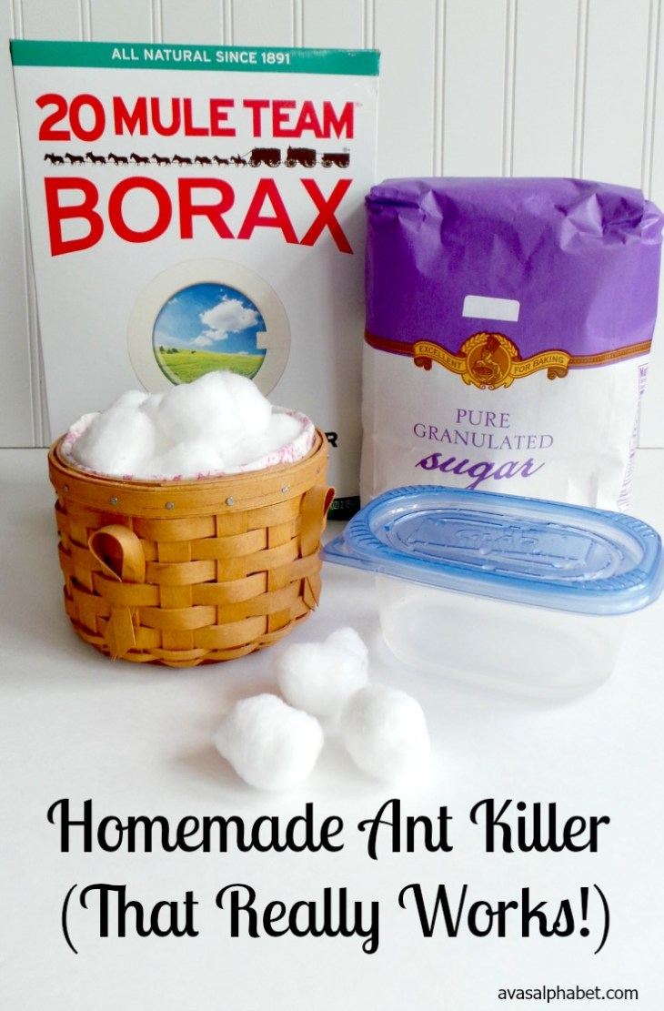 Homemade Ant Killer (That Really Works!)