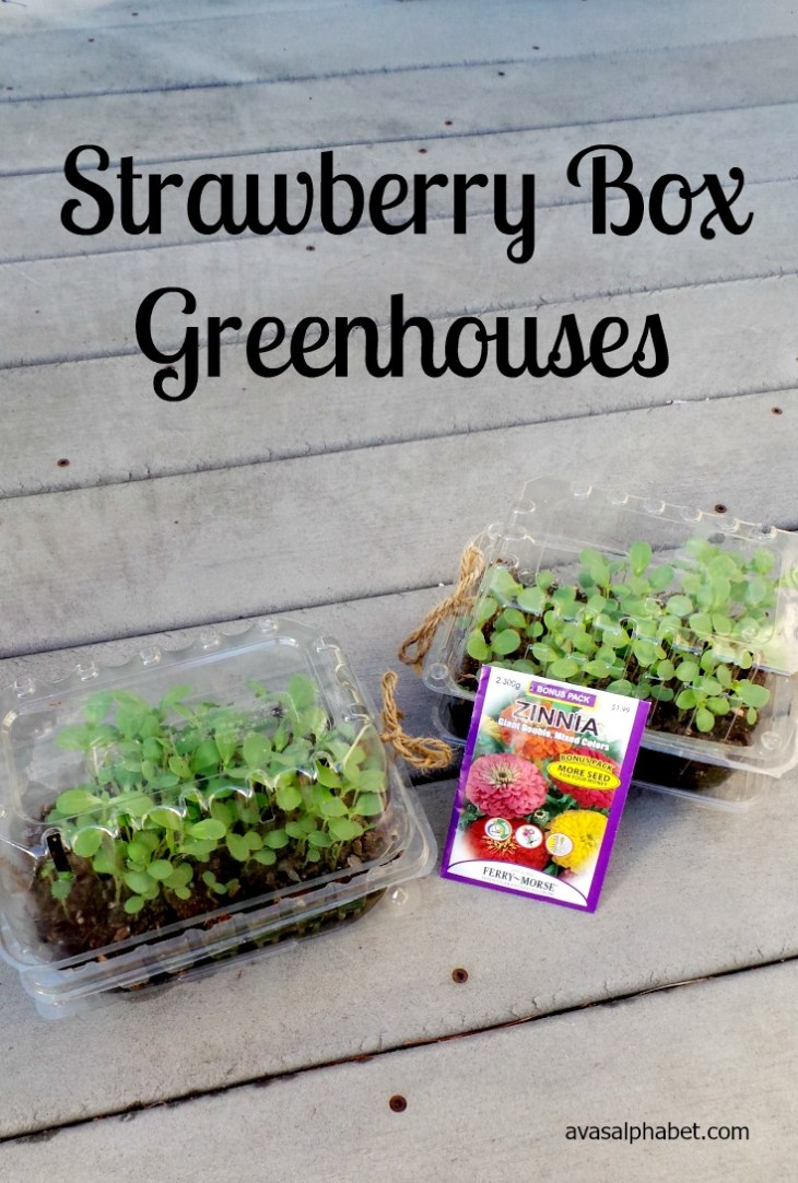 Strawberry Box Greenhouses
