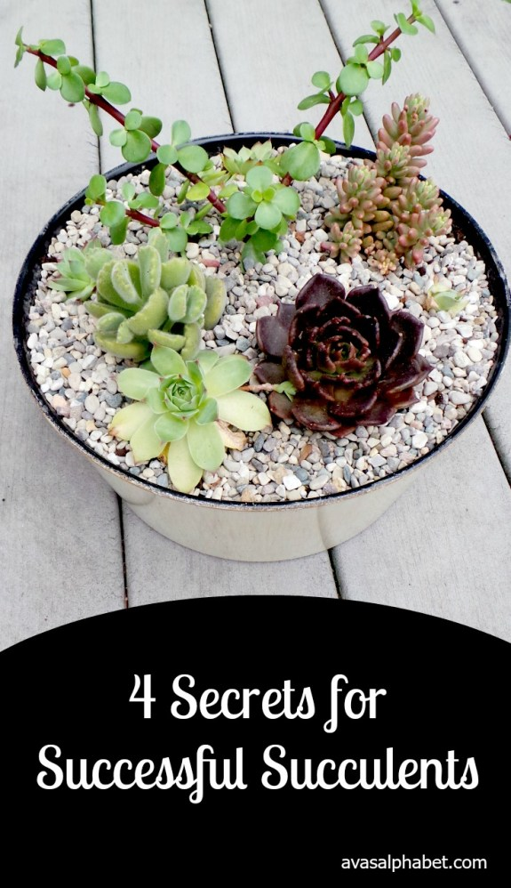 4 Secrets for Successful Succulents from Ava's Alphabet