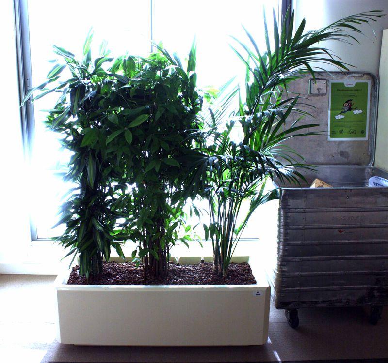 Plantes Dinterieur Palmier Et Plante Grasse Dans Leur Bac