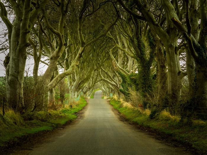Dark Hedges, Northern Ireland! The gnarled trees make this drive one of the most beautifully scary paths in the world.