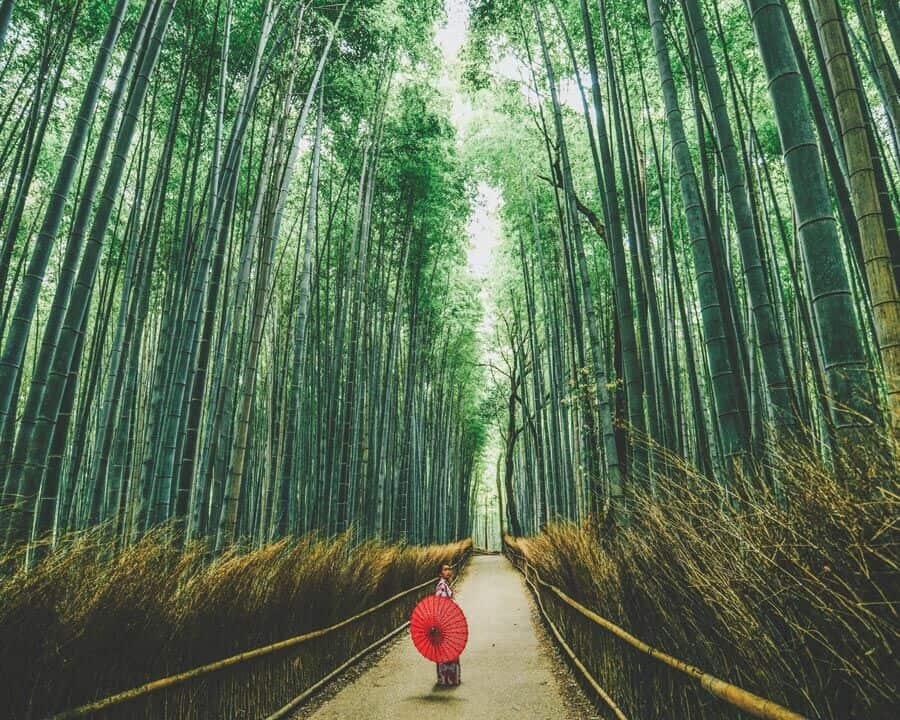 Best things to do in Kyoto, Japan