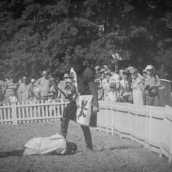 spectacle-equestre-chevalerie-ranrouet-2016-petit-bleus-photos-img_0684