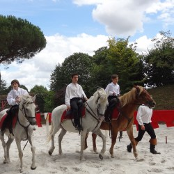 Spectacle-equestre-chevalerie-Clisson-2017-DSC05824