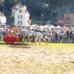 course-de-char-184018868-aventureaugalop