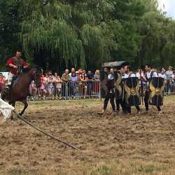 spectacle-equestre-2020-les-celtes-AG-Divino-Aventureaugalop-08