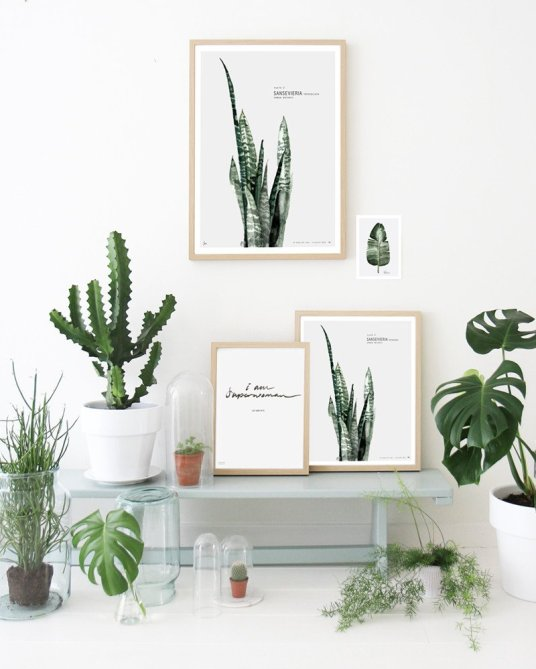 affiches-vegetales-decoration-mural-feuille-cactus-aventuredeco