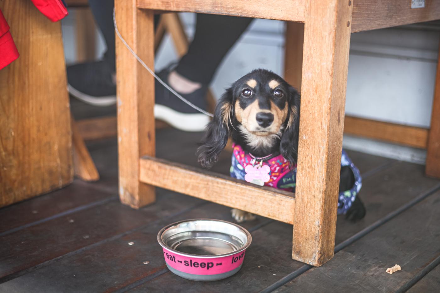 18 pet friendly patios in calgary