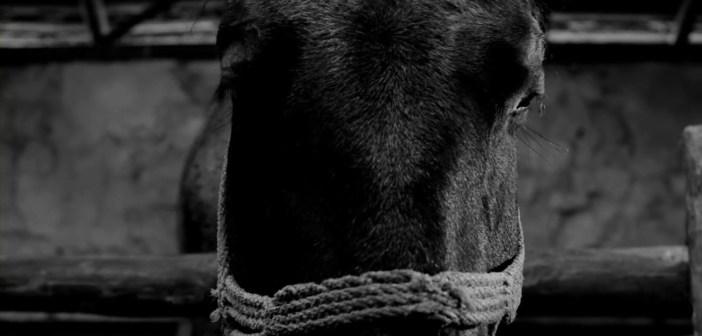 Negro caballo