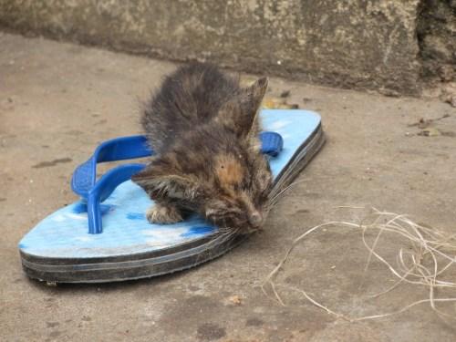 cute kitty ghana