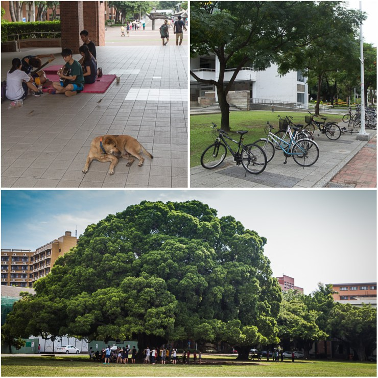 national cheng kung university campus life