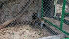 58 ter léopard, panthère