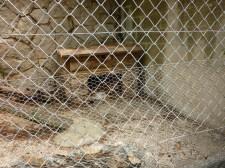 70. lynx pardelle