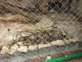 71. Excréments dans la cage du lynx pardelle