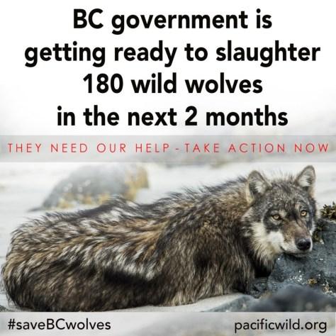 savewolves4