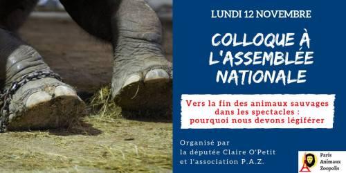 Retour sur le colloque du 12 novembre 2018 à l'Assemblée nationale contre l'exploitation des animaux sauvages dans les cirques et les spectacles