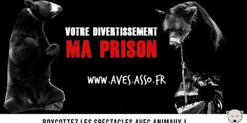 AVES France milite toujours pour obtenir l'interdiction des spectacles de montreurs d'ours