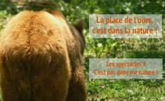 affiche-ours-1-1