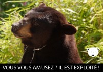 affiche-ours-2