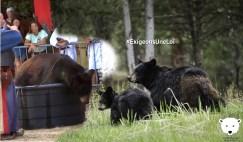 Contre l'exploitation des ours, exigeons une loi
