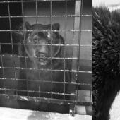 Montreurs d'ours : Manifestation lundi 14 octobre 2019 à 13h à Paris