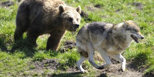 Loups, ours, aigles, vautours, hiboux dressés : non à l'exploitation des animaux lors de la 9ème Grande Fête Médiévale au Château de la Chapelle d'Angillon