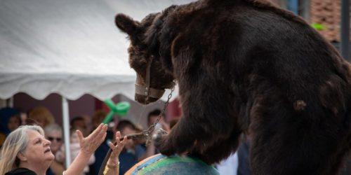Nos associations demandent le transfert en urgence des 3 ours des Poliakov dans un sanctuaire.