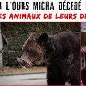 Lettre ouverte à Elisabeth Borne. Suite à la mort de l'ours Micha, nos organisations demandent la saisie de l'ensemble des animaux du couple de dresseurs Poliakov-Bruneau.