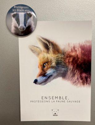 magnet blaireau et carte postale renard