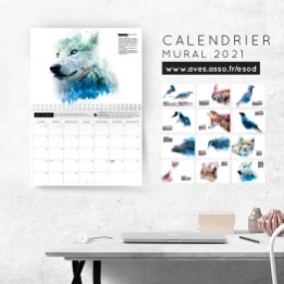 Calendrier mural 2021 - Loup