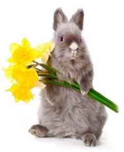Cruelty_Free_Bunny_AveSeena