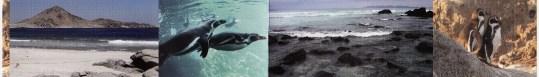 Sphenisco - Schutz des Humboldt-Pinguins e.V. (Quelle: Informationsflyer)