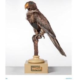 S. 386 aus dem Bd. Humboldt, Minerale und Gesteine, Wallstein 2019, Humboldts Papagei