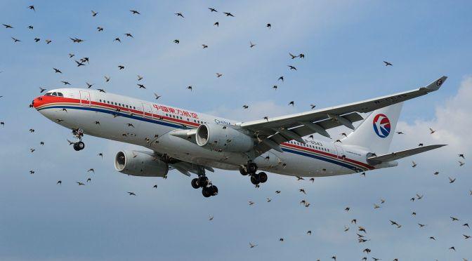 ¿Por qué resurge el número de bird strikes?