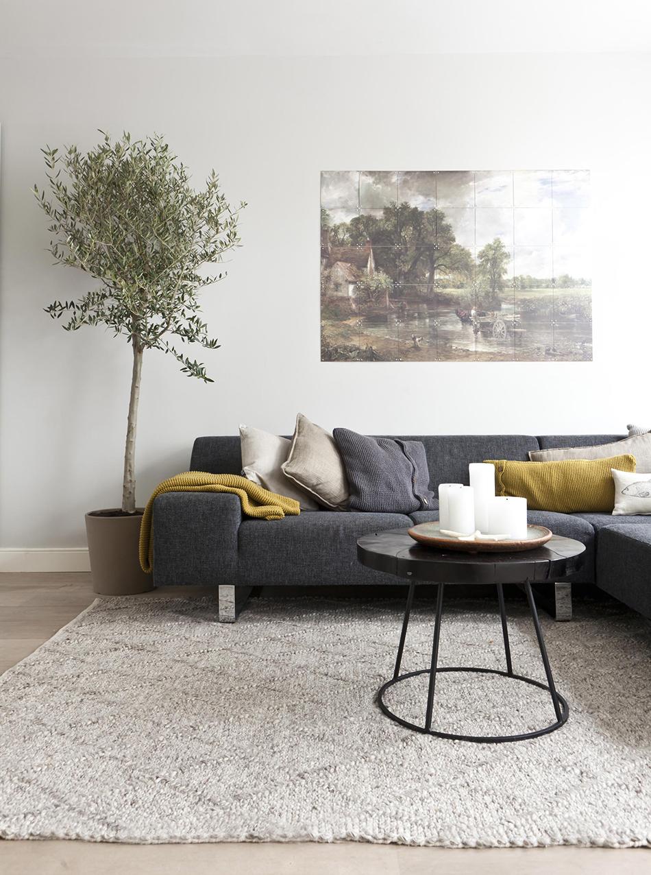 Indoor Olive Trees