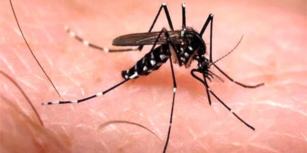 Chikungunya: conclusa l'emergenza su Latina