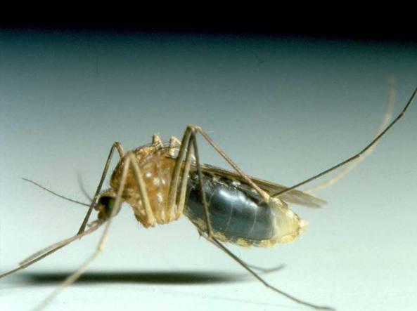 Allarme malaria, scatta lo stop per le donazioni di sangue a Ginosa