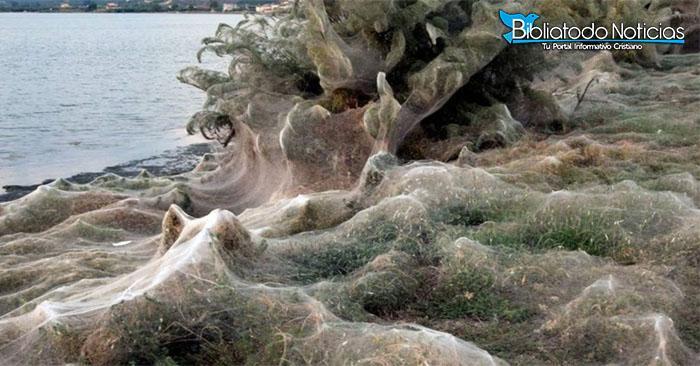 300 metros de una extraña telaraña cubrió una playa de Grecia