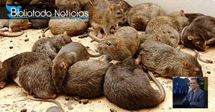 Pastor pierde una pierna por epidemia de ratas en California