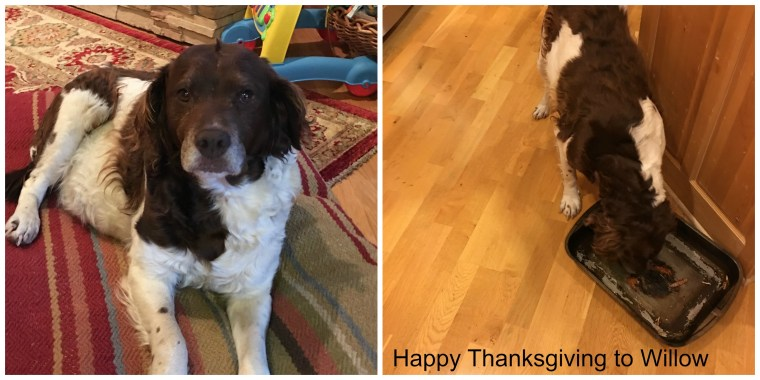 Happy Thanksgiving to our Willow