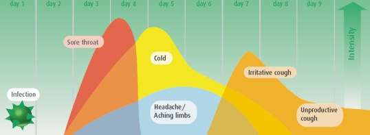 The immune system - Have you been introduced to the cold ...