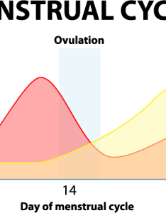 However when in most cases you don   conceive progesterone joins oestrogen  rapid decline the sudden fall these hormones causes your uterus to also understanding period and hormone imbalance rh avogel