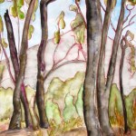 Painting of the tall trees at buangor national park, about 4 years after the horrible fires. Shows blackened trunks.