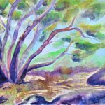 Watercolour of an australian scene with a many branched eucalyptus tree